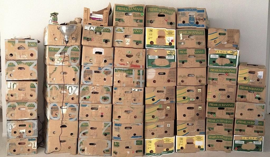 isjw all boxes good